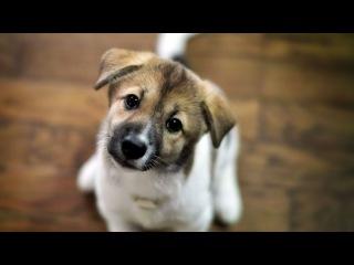 Собака — лучший друг человека [социальная реклама]