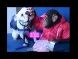 HD Monkey and Dog inside lift (a) - 12