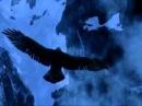 гр. Русский берег. Чёрный ворон.avi