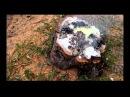 Удаление пня калиевой селитрой