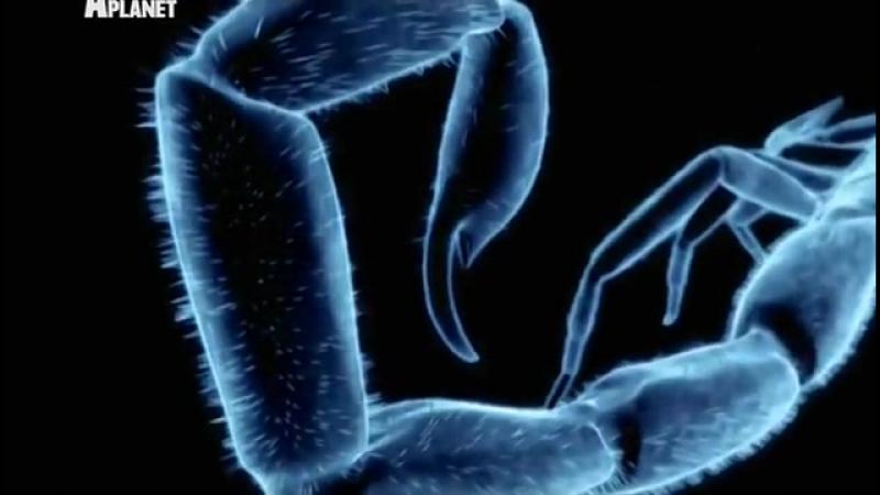 Войны жуков-гигантов Monster bug wars 8 серия