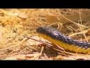 «72 самых опасных животных Австралии (03). Живые или мёртвые» (Документальный, 2014)