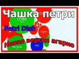 НОВАЯ ВЕРСИЯ АГАРИО | ЧАШКА ПЕТРИ | PETRI DISH.