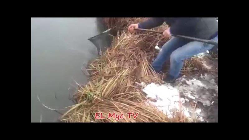 EL Mус Tv●Чеченцы на реке ловят много рыб