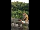 маймун)