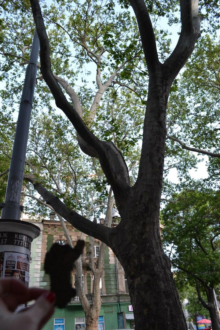 Магические свойства деревьев. Магия деревьев. Деревья в магии. - Страница 2 OVMK9QKAF0M