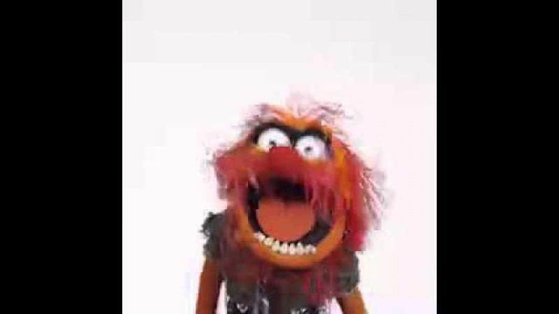 Happy birthday. Animal. Muppets.