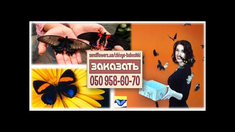 Купить живых бабочек. Салют из бабочек. Подарок на свадьбу, День Рождения, подарок девушке