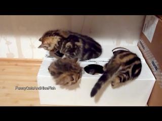Котята и коробка