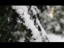 Cressida Winter is Coming Again