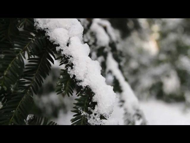 Cressida - Winter is Coming Again