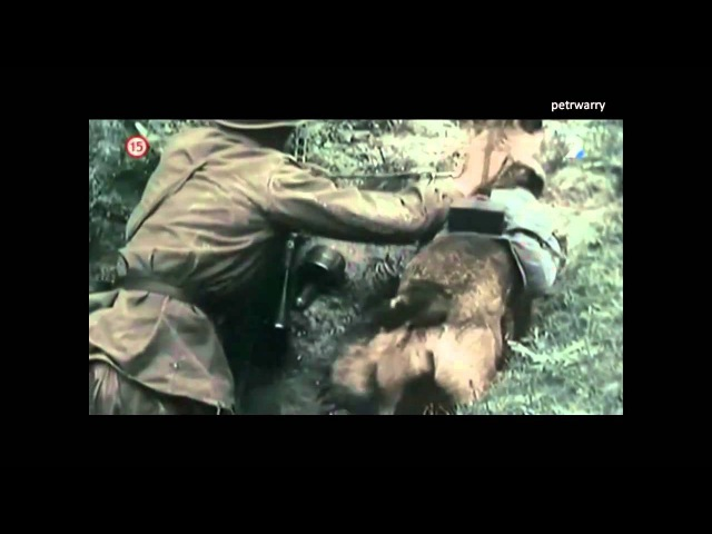 Rare WWII Footage - Anti Tank Dog Mine - Eastern Front Battlefield