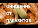 Адекватное питание. Очищение от паразитов. Лекция 4 - Замалеева Г. А.