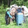 Пчеловодство за 3 дня - 2019г.