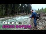 Ручьевая Форель. Алексей шанин