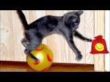 Кошки и собаки против воздушных шаров. Забавные коты и псы
