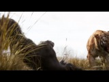 Книга джунглей 2016 Русский трейлер   YouTube
