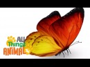 BUTTERFLIES | Animals for children. Kids videos. Kindergarten | Preschool learning