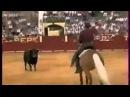Мерлин-лошадь торреро))ЖЕСТЬ