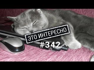 Это интересно 342: Кошки. Интересные факты.