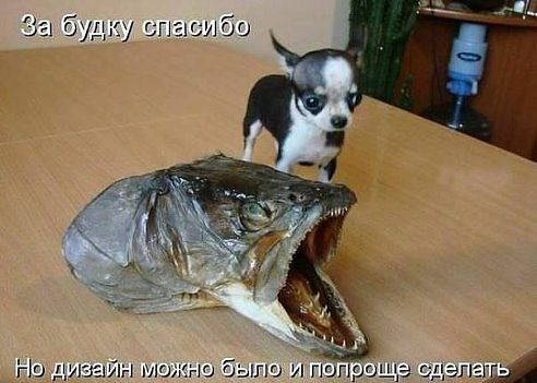 http://cs629228.vk.me/v629228494/31d9e/tTy8mdjPGBs.jpg