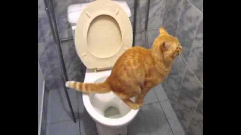 Кошка в туалете - это круто!