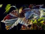 Vibrasphere - Erosion (Unofficial HD Music Video)