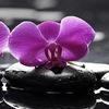 Мир Орхидей / World of Orchids