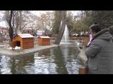 kuğulu parkı Гуляем в Лебедином парке