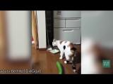 Коты и огурцы (Видео PRO)
