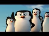Отрывок из мультфильма «Пингвины Мадагаскара»