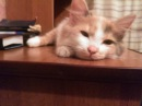Прикольное Видео Про Кошку Таську