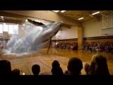Потрясающая голограмма кита в спортивном зале школы