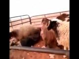 Талдырып тастады) хаха