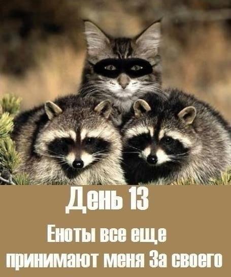 http://cs629230.vk.me/v629230316/296c5/q-2H-nrY2R8.jpg