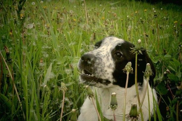 Сухой корм для собак мелких пород Royal Canin Mini Exigent