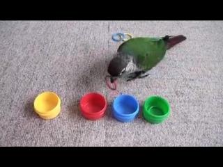Очень умная птичка
