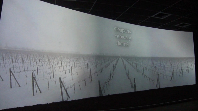 Жинзь Винограда (Шабо)