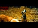 СуперБобровы - Трейлер 1080p