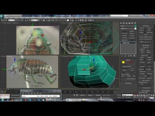 1 урок - Продвинутый моделинг в 3dsMax и Mudbox (Японский Жук)