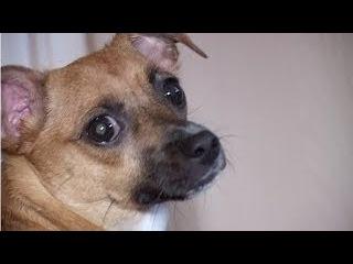Мама выгнала из дома собаку. Собаку решил не оставлять мальчик. Ушел с ней из дом ...