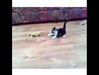 котёнок и ящерица