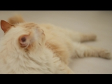 ГАРФИЛД_CATS_PRM