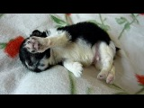 Newborn Puppy Found on the Sidewalk - Joys Happy Ending Story