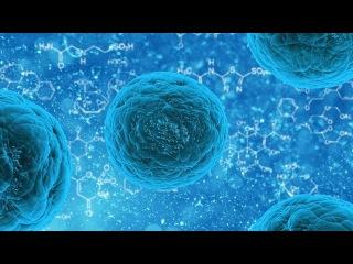 1. Химия клетки - Неорганика, Углеводы, Жиры, Белки (9 класс) - биология, подготовка ...