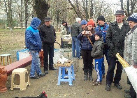 В Белгороде-Днестровском прошла выставка голубей