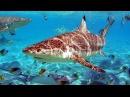 Грандіозна мандрівка вглиб океанів 3D Документальний фільм