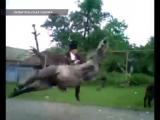 Конь кидает прогибом -  (Ржач, секс, порно, смешно, приколы,  вот это поворот, драка, разборки)