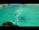 дельфины и человек 1