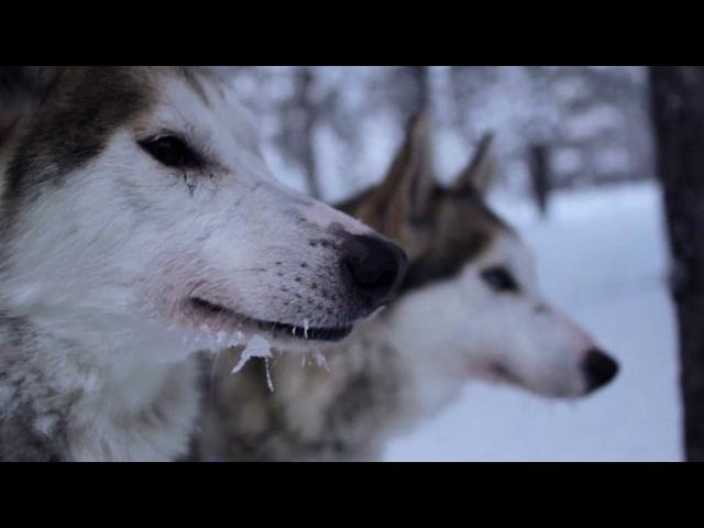 Teaser Borealis - la Laponie en traîneau